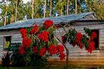 Weihnachtssternbaum