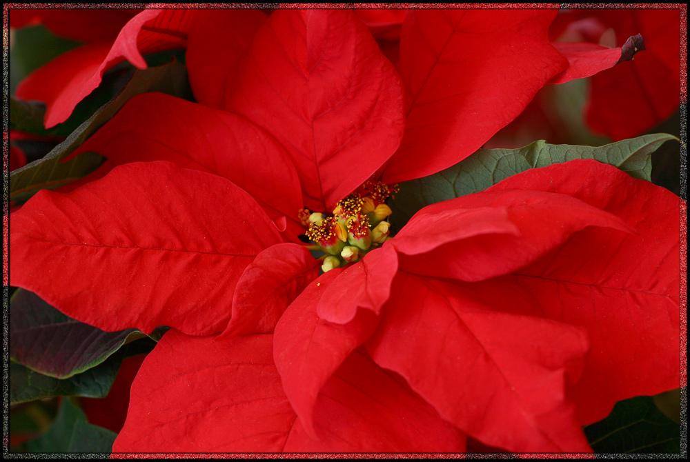 *Weihnachtszeit*