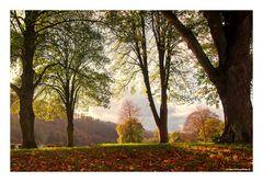 Weil der Herbst so schön war.....