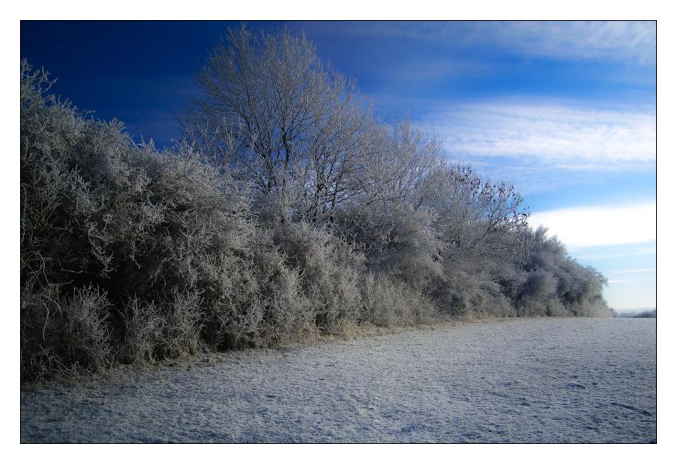 weil es wirklich schönes Winterwetter war......