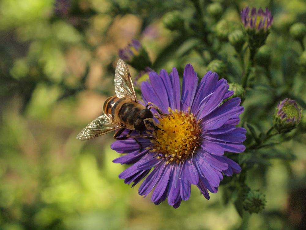 Weil ich Insekten so liebe