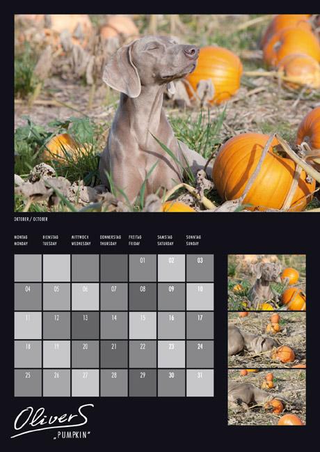 Weimaraner betet Sonne an - aus Weimaraner 2010 PhotoArt Kalender