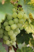 Wein 2013 III