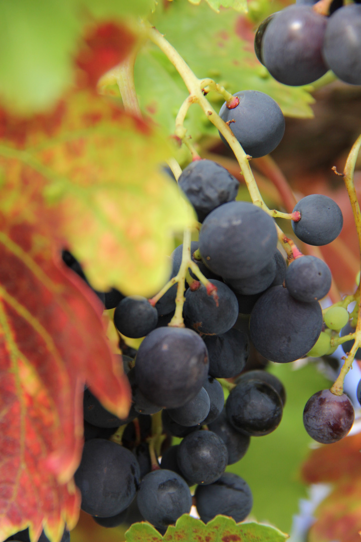 Wein 2013 VI