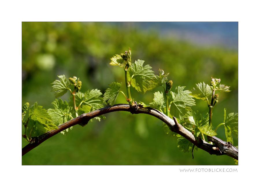Wein Bogen