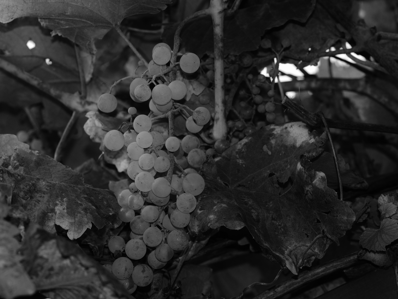 Wein im November
