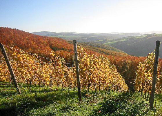 Wein in der Pfalz
