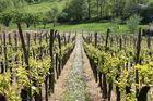 Wein in Frankreich