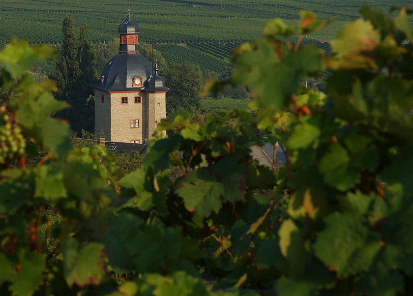 Wein-Lage