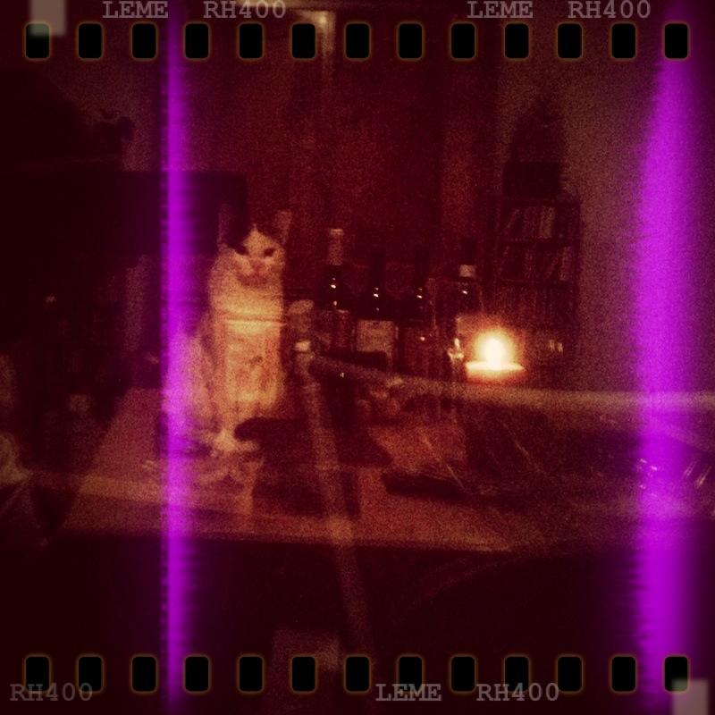 Wein mit Katze