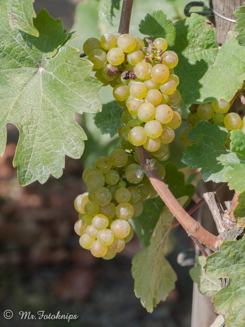 Wein (Rohdaten:)