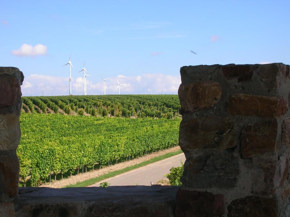 Wein und Windräder