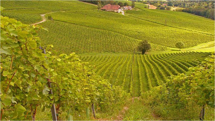 Weinbau...