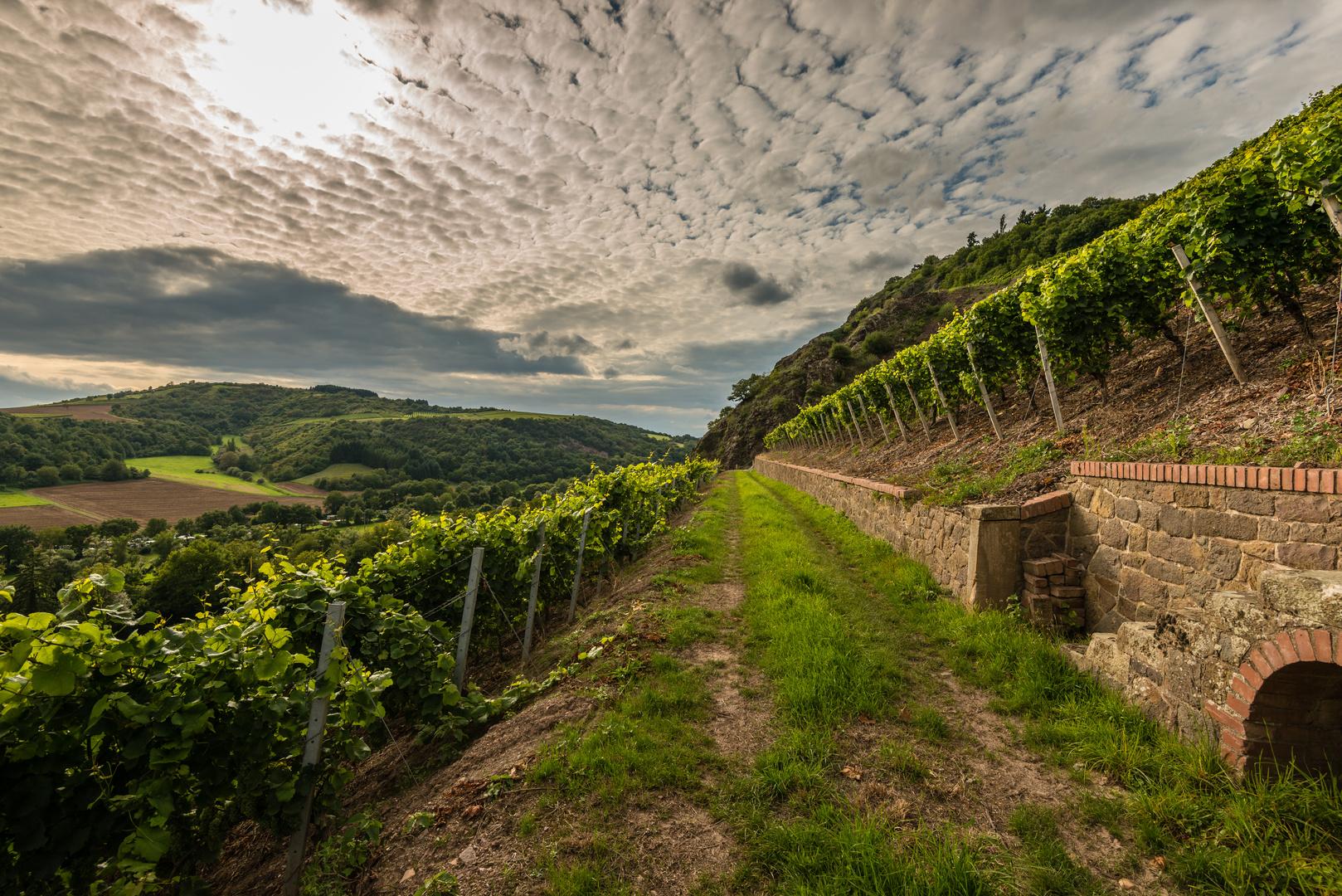Weinbau bei Schlossböckelheim