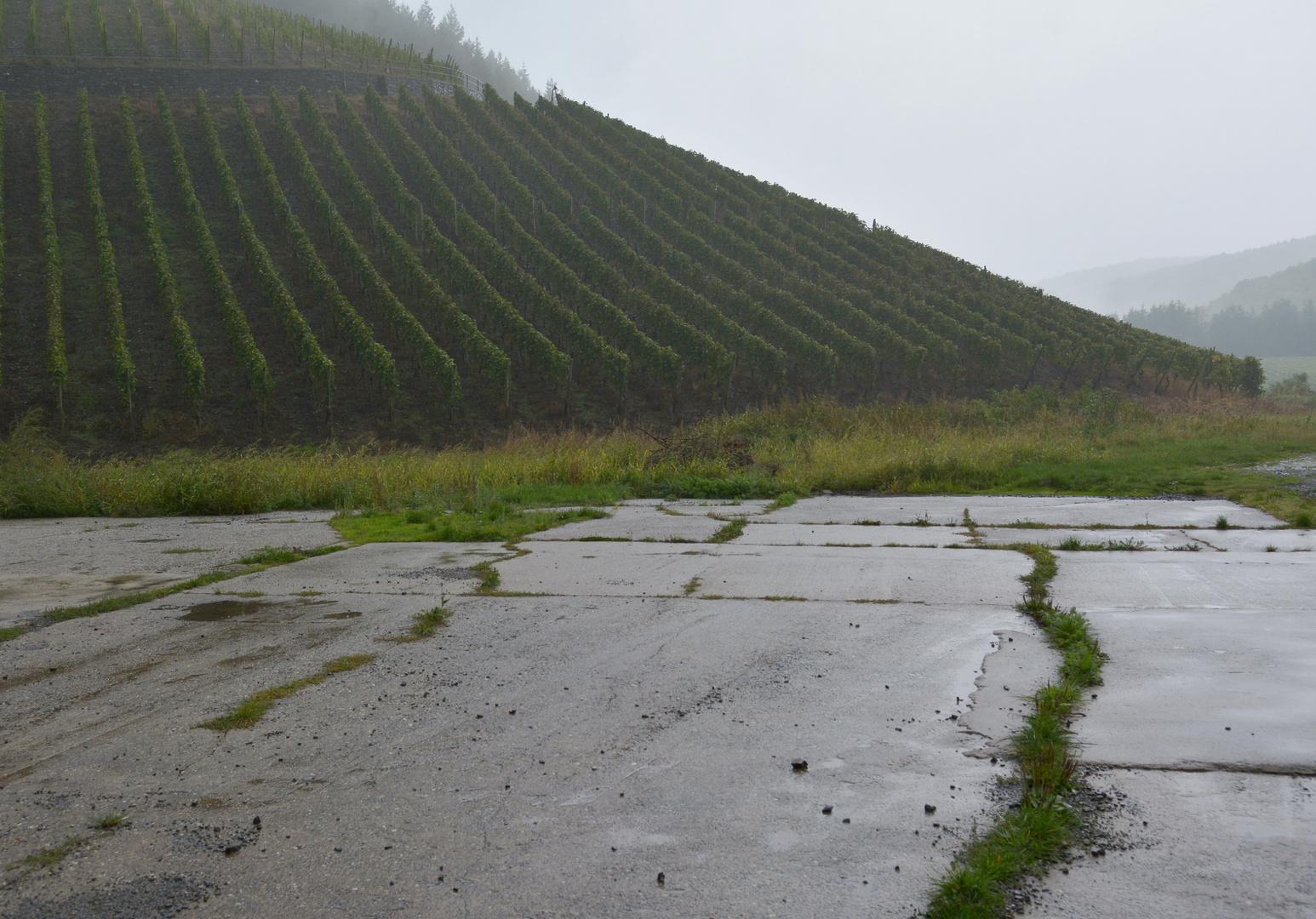 Weinberg bei Ahrweiler