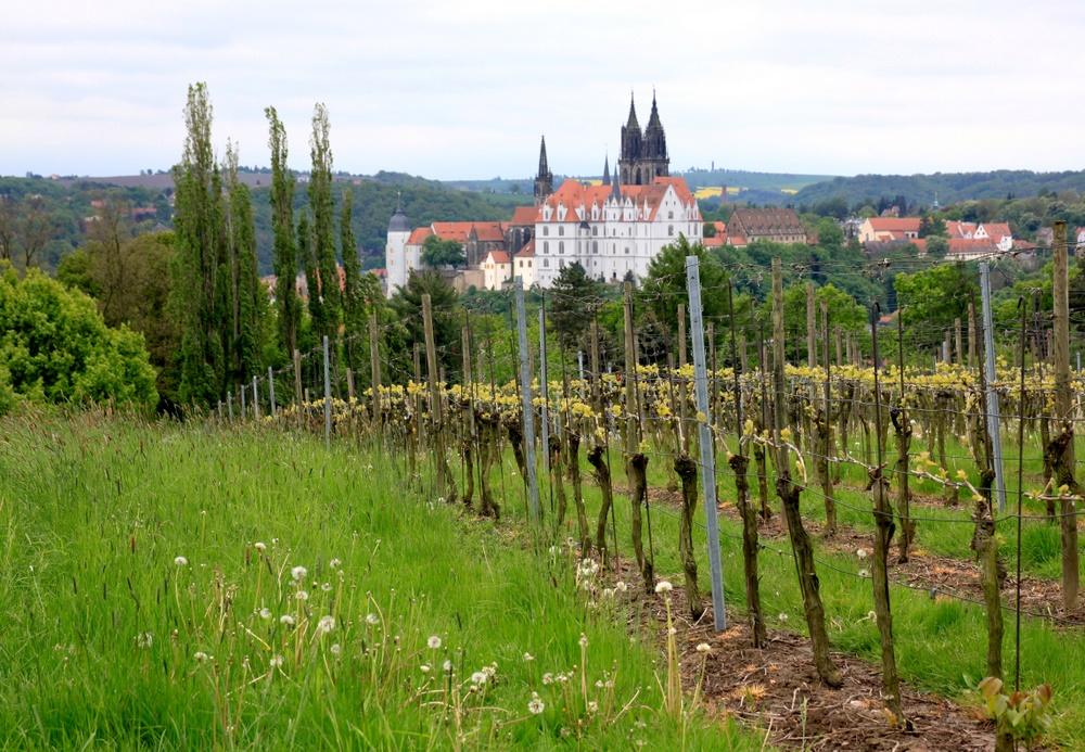 Weinberg und Albrechtsburg 2