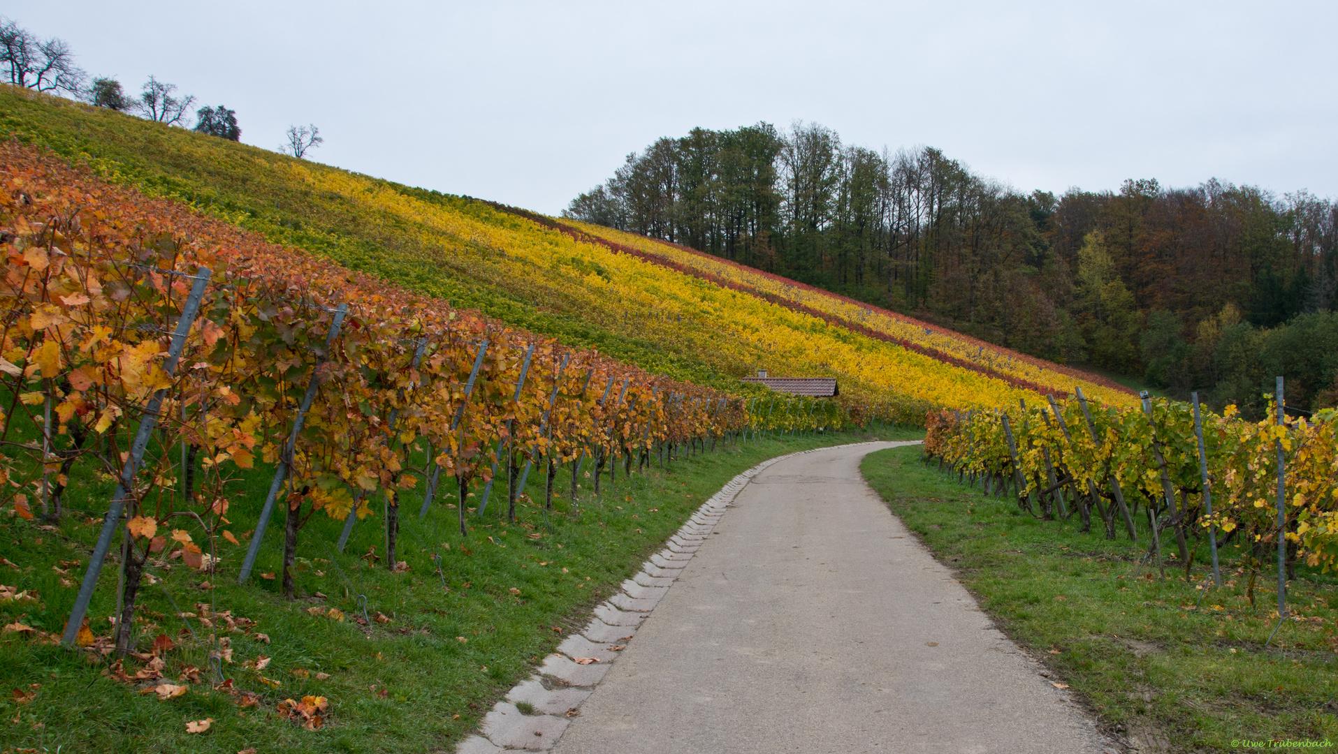 Weinberge bei Aspach im Rems-Murr-Kreis (2)