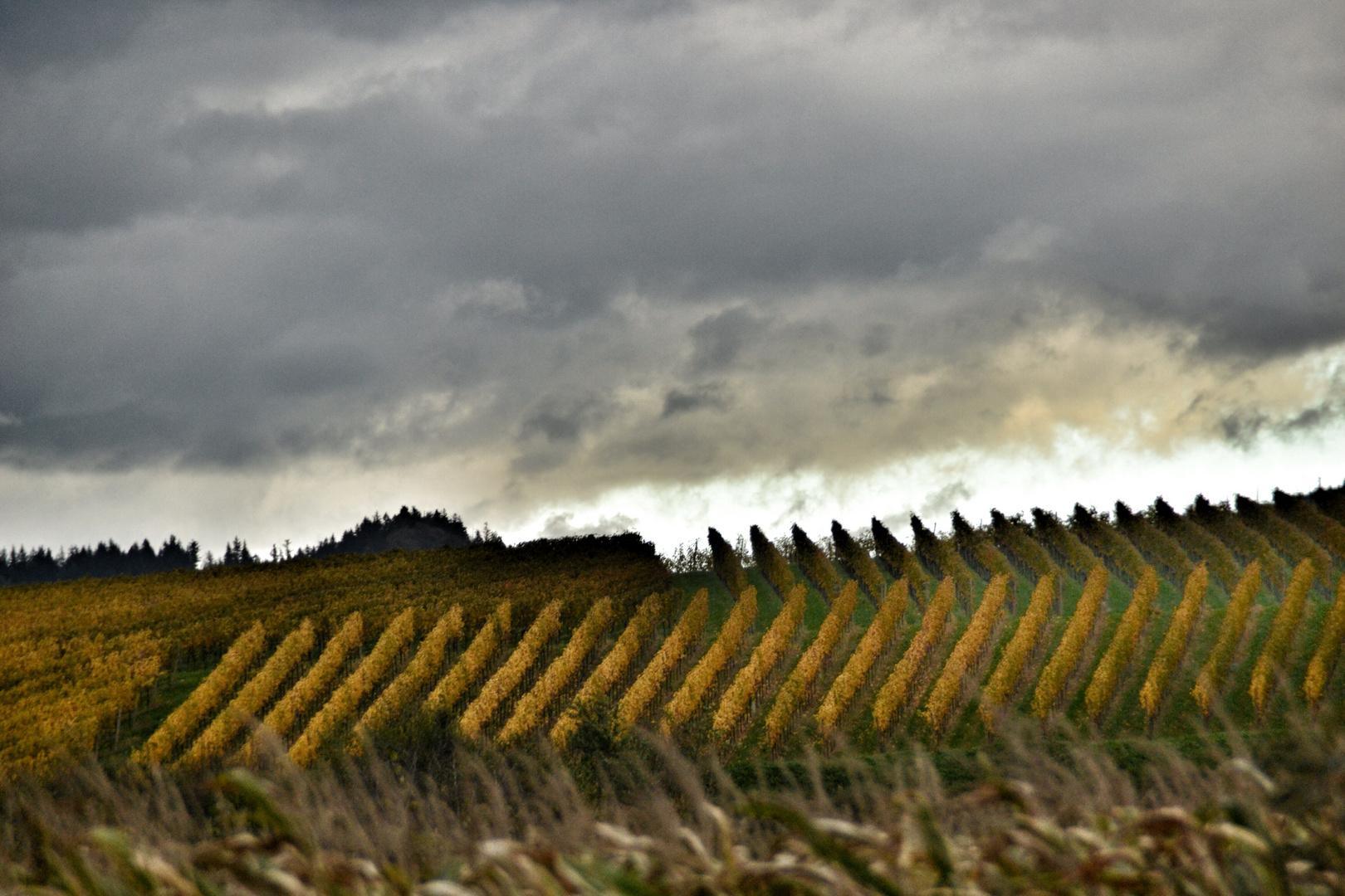 Weinberge im Herbst