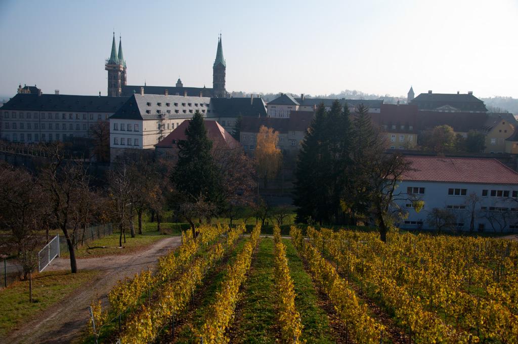 Weinberge mit Bamberger Dom