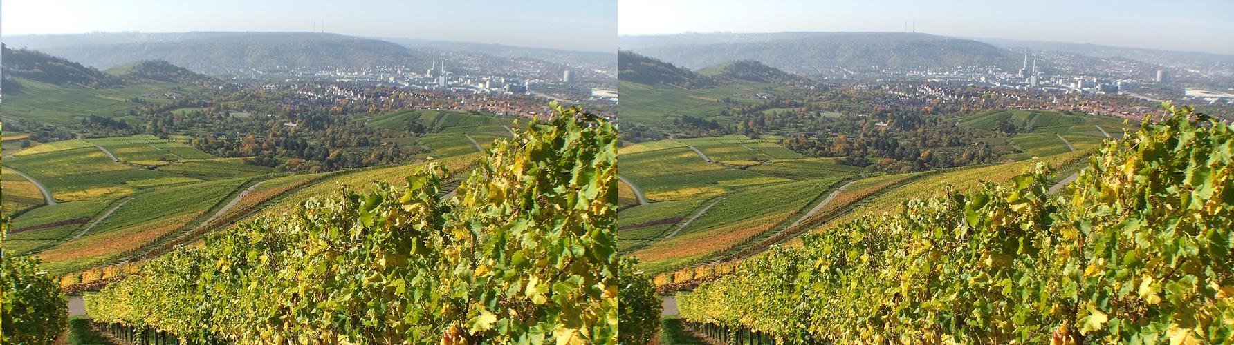 Weinberge mit Blick auf Stuttgart