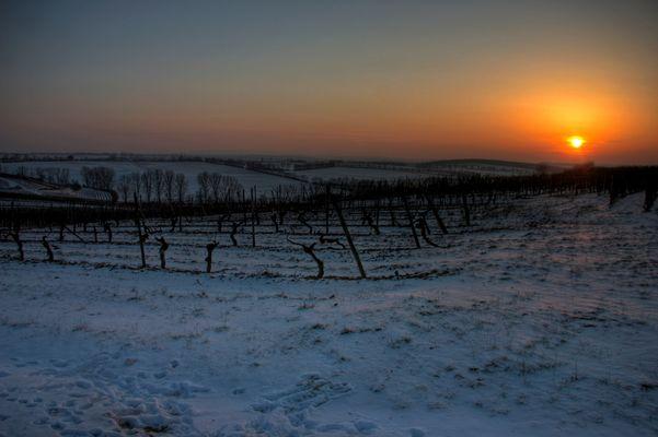 Weinberge - Sonnenuntergang
