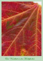 Weinblatt in den Herbstfarben