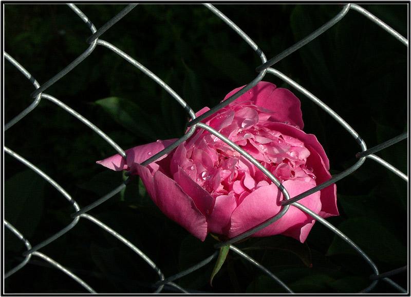 Weine nicht kleine Blume...