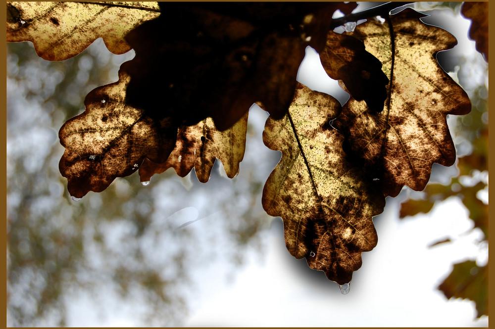 weinende Blätter ;)
