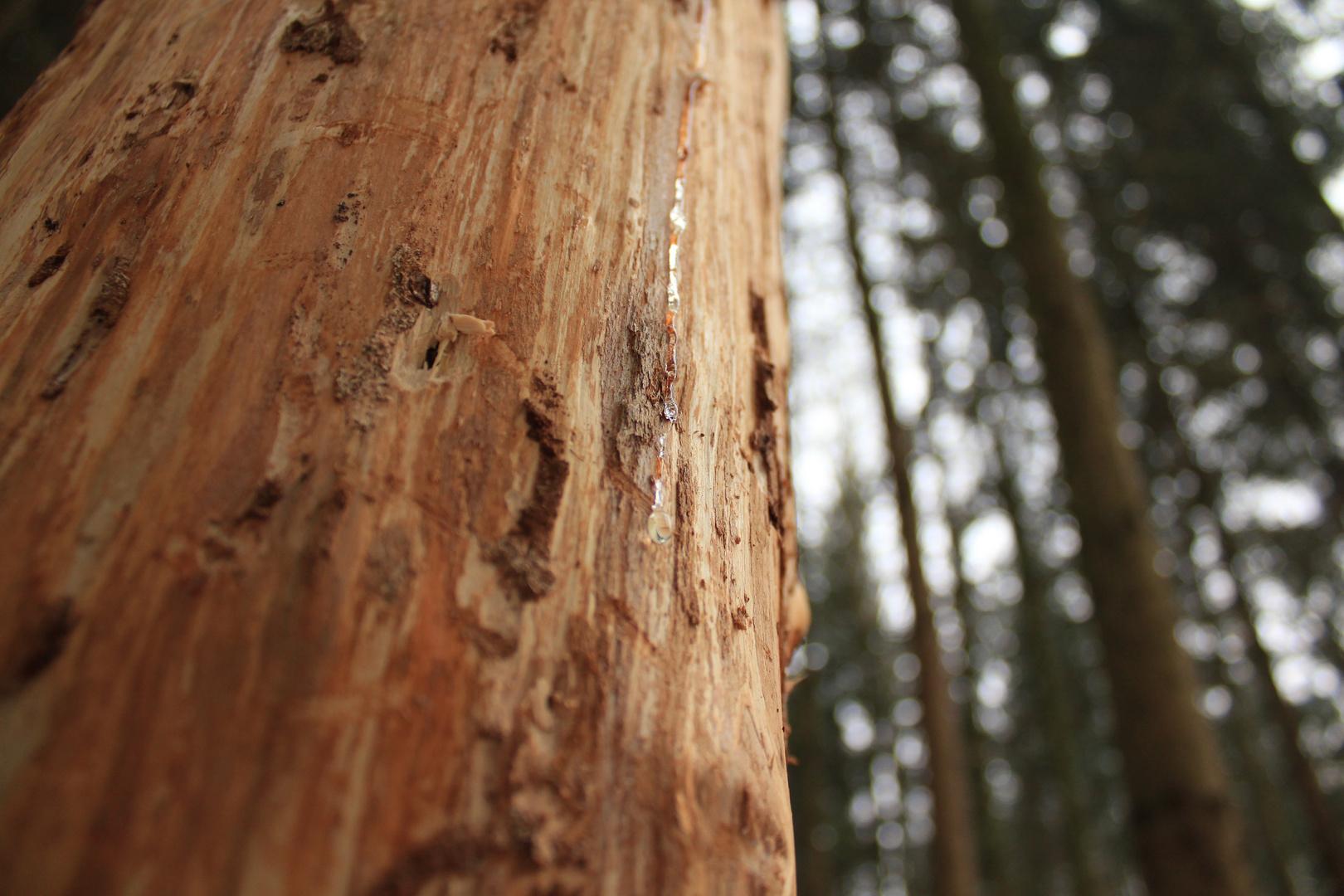 Weinender Baum