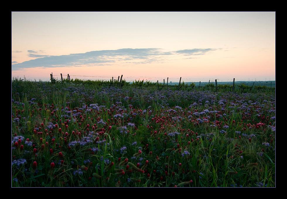 Weingärten und Wiesen