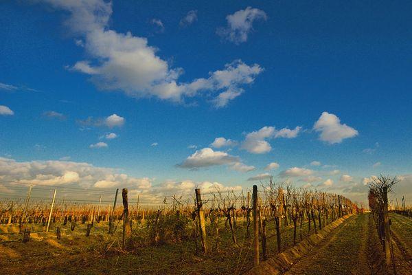 Weingarten im Burgenland