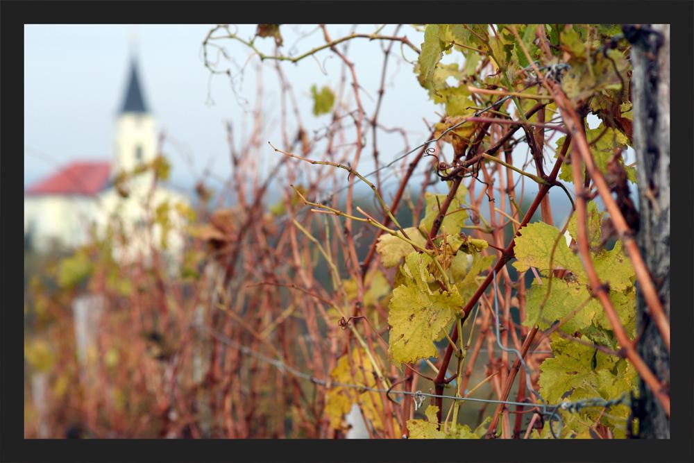 Weingarten mit Aussicht