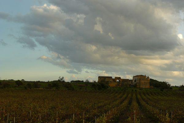 Weingut bei Marsala