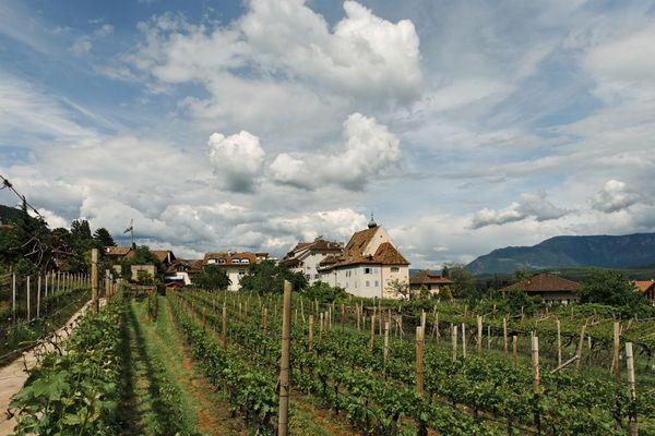 Weingut Pichler am Kalterer See