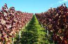Weinherbst in Heilbronn