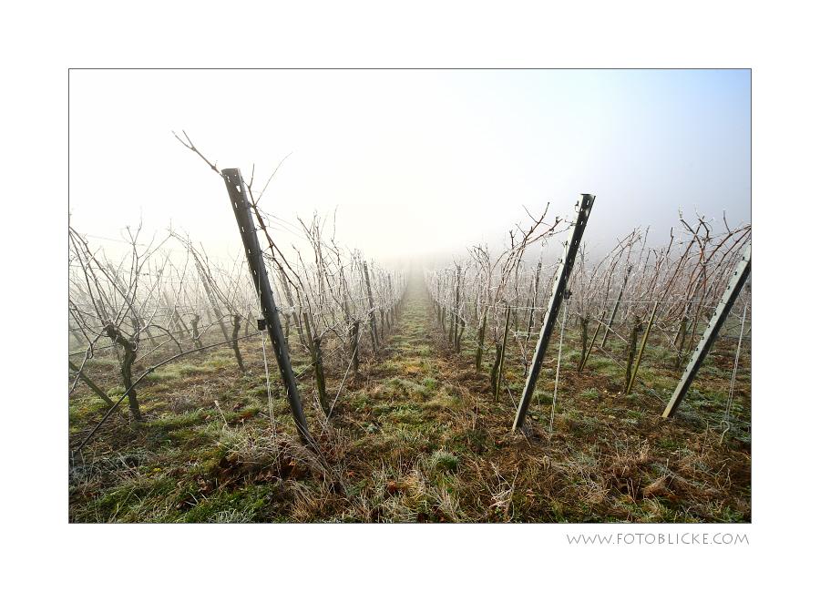 Weinjahr 2012 #2