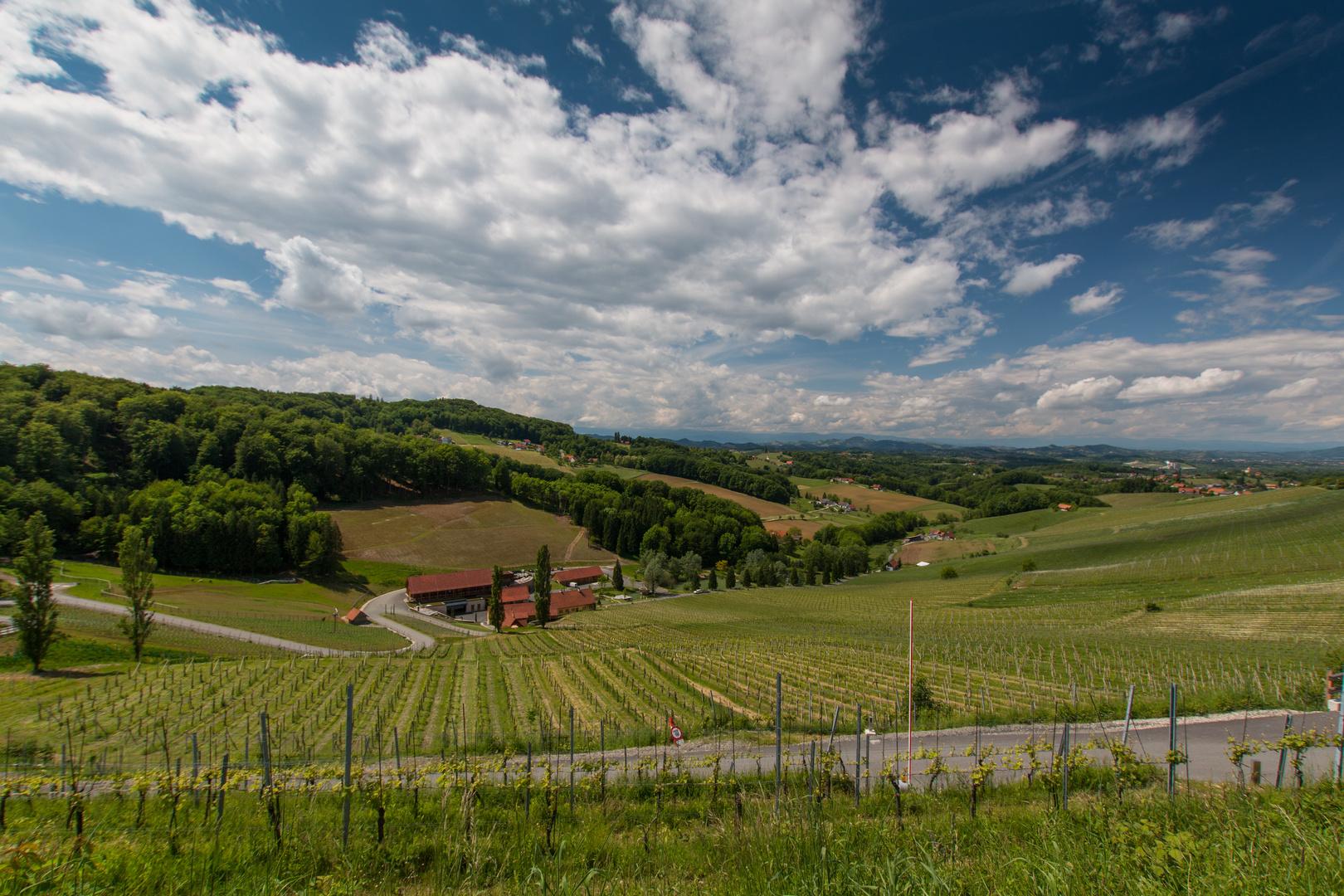 Weinlandschaft 1