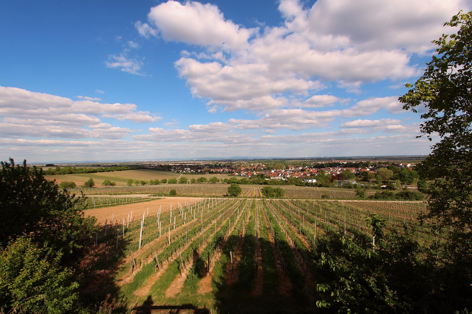 Weinlandschaft bei Deidesheim