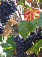 Weinlaub