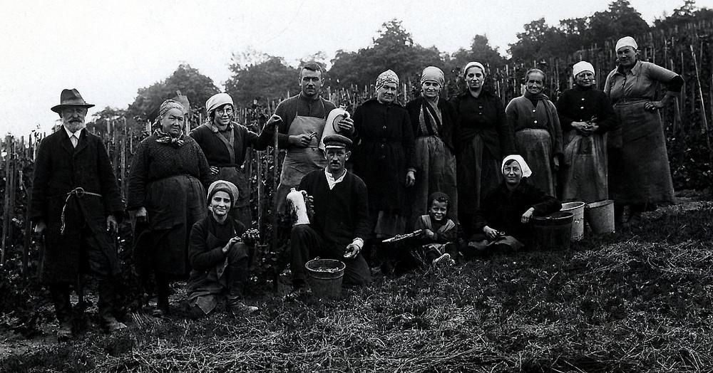 Weinlese 1930
