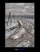 Weinort Oberschwappach