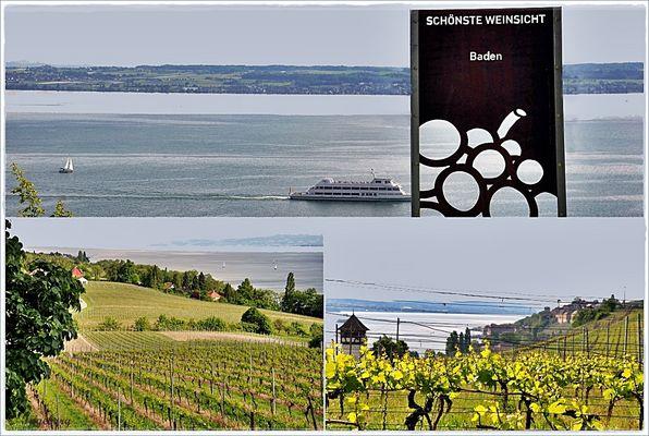 Weinsicht Baden