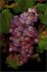 Weintrauben für CARLA GALLER