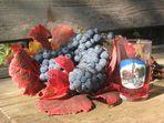 Weintrauben und mehr . . .