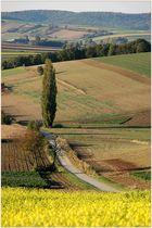 Weinviertler Herbstfarben *2*