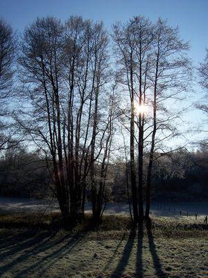 Weiseler Natur Dez 2004