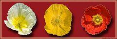 Weiß Gelb Rot