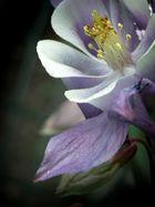 weiß lila