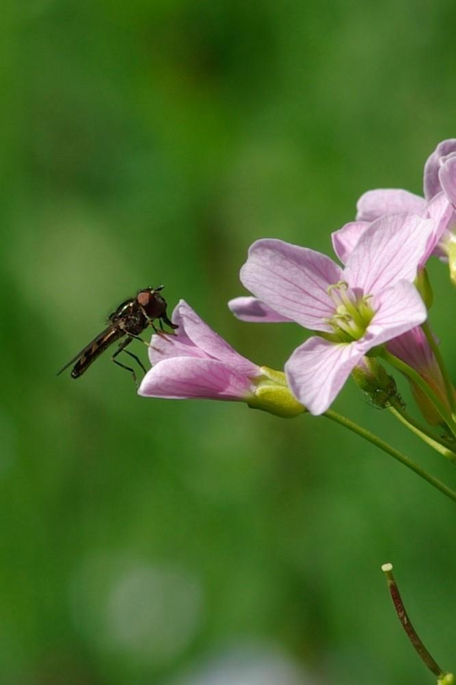 Weiss nicht genau um welche Insektenart es sich hier Handelt