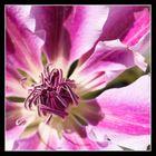 Weiß-Pink